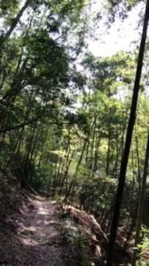 道中の竹林